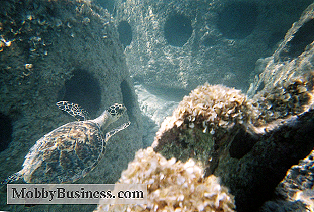 Snapshot Small Business: Eternal Reefs